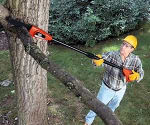 cutting a branch