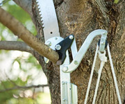 cutting a smaller branch using a lopper