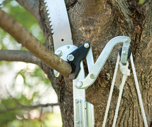 lopper for cutting smaller branches