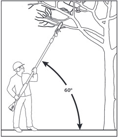 the right pruning angle