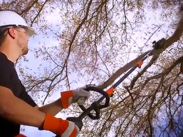 cutting a branch using the Maverick 41BDPS1C983
