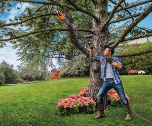 pruning a tree in your garden